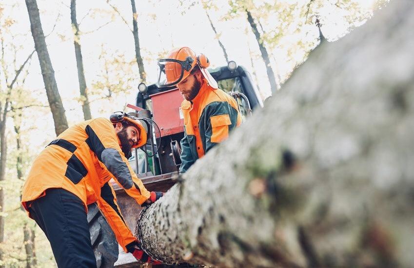 Schwedens und Europas Nr. 1 im Wald - SCA